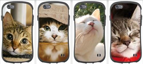 cat180318.jpg